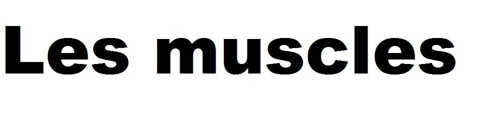 lien vers les muscles
