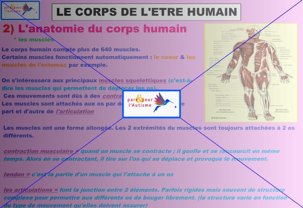 les muscles du corps humain 1