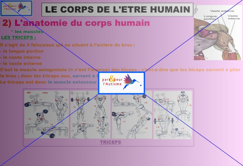 les muscles du corps humain 8
