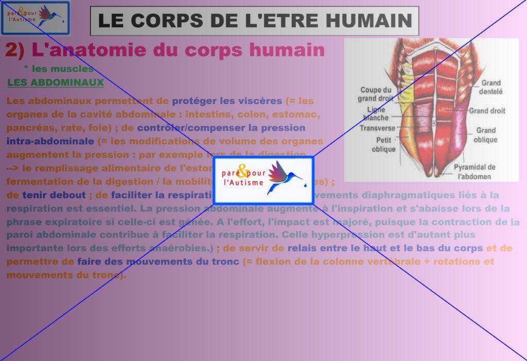 les muscles du corps humain 9