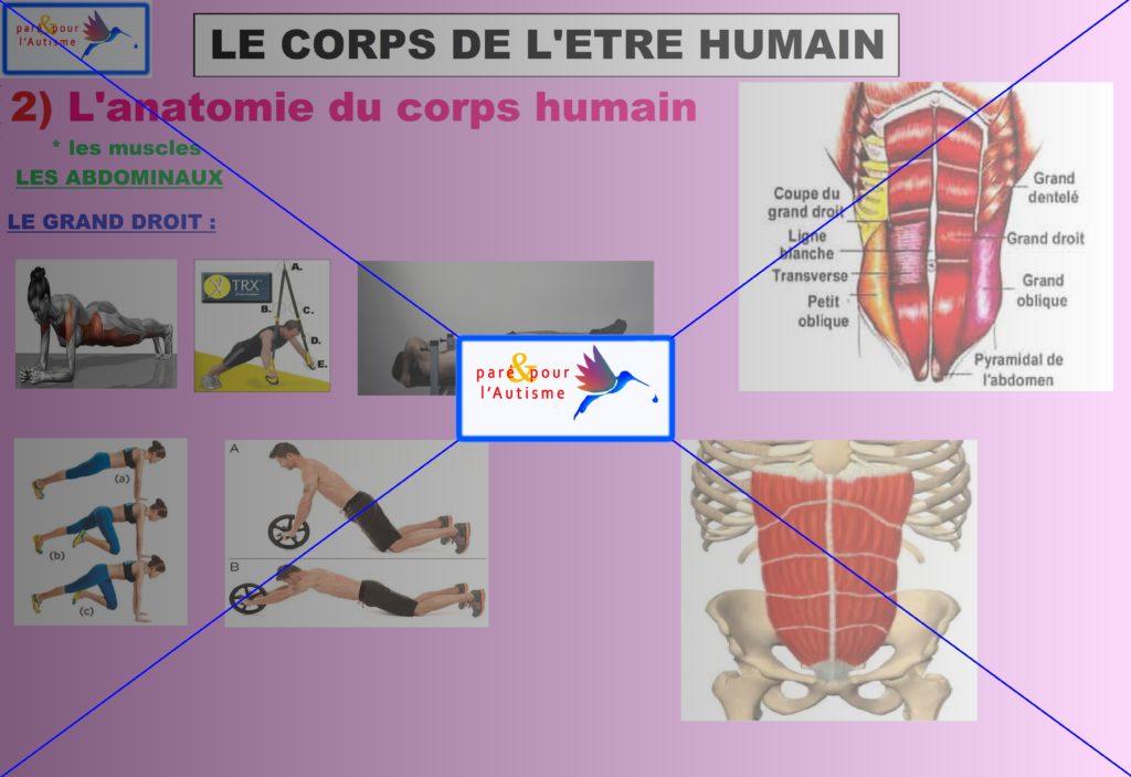 les muscles du corps humain 10