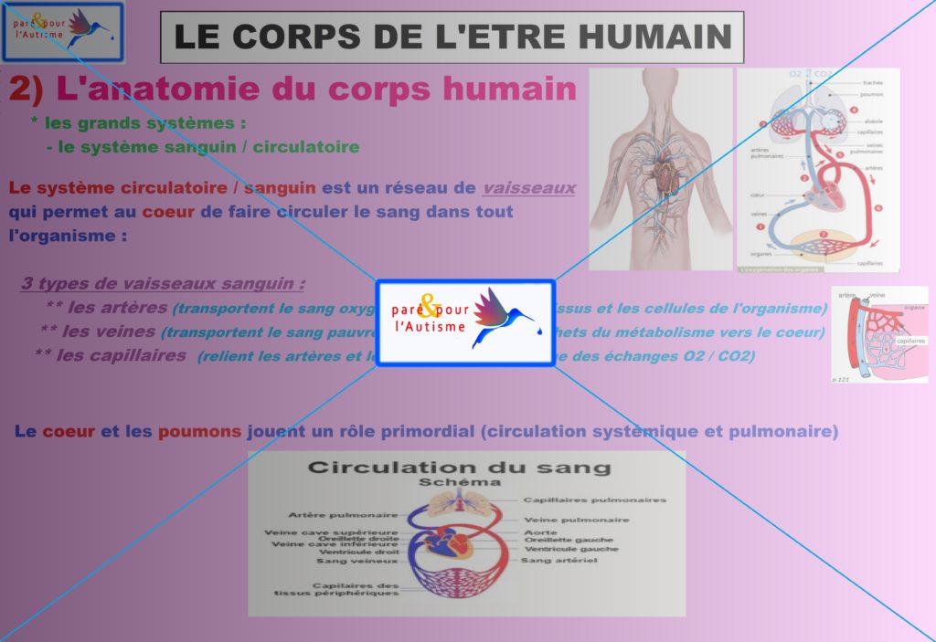 système sanguin circulatoire 2