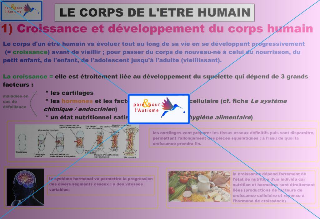 croissance et développement du corps humain