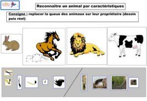 reconnaître un animal par caractéristiques